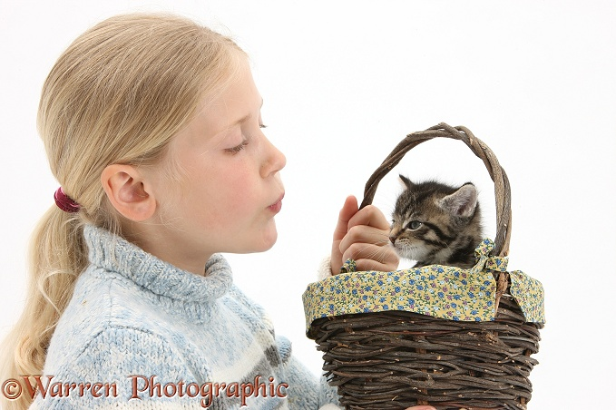 Siena with cute tabby kitten, Fosset, 6 weeks old, in a wicker basket, white background