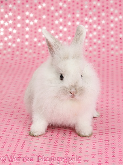 Cute baby white rabbit, sitting on pink starry background and looking up
