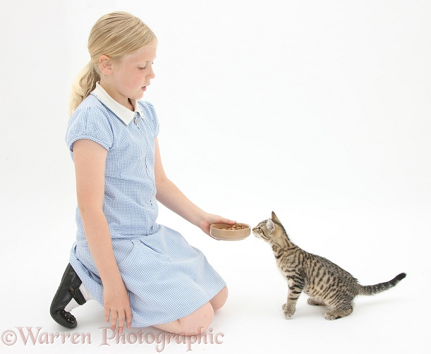 Siena giving tabby kitten, Stanley, 3 months old, some food from a bowl, white background