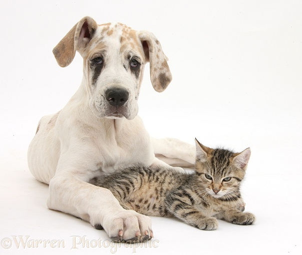 Cats And Dogs Kittens