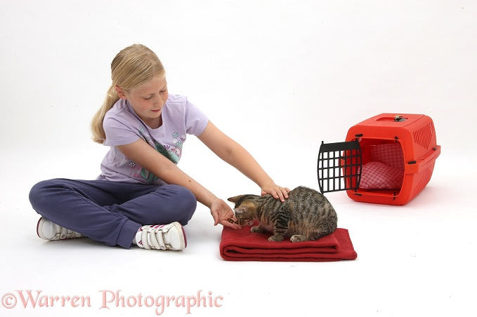 Siena rewarding tabby kitten, Stanley, 4 months old, with treats for going onto a mat, white background
