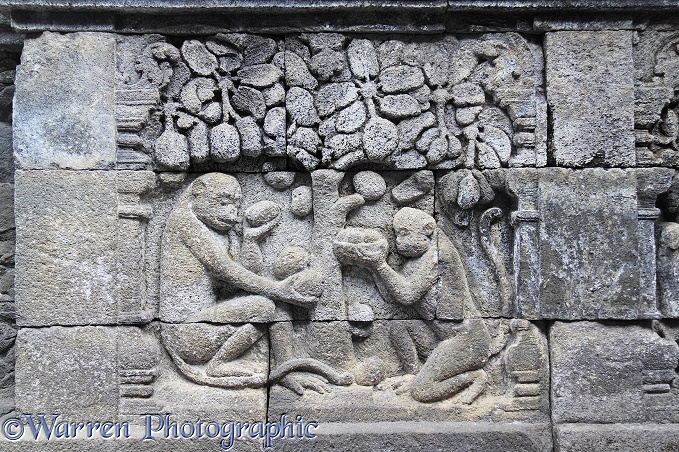 Monkeys with food detail at Borobudur Mahayana Buddhist monument.  Magelang, Java, Indonesia