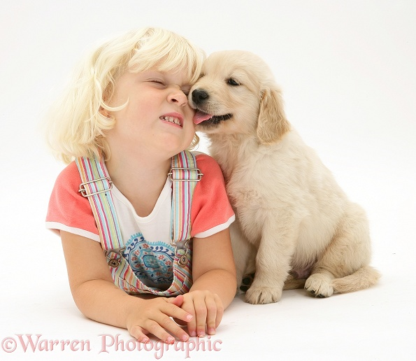 Siena being licked by Golden Retriever pup, white background