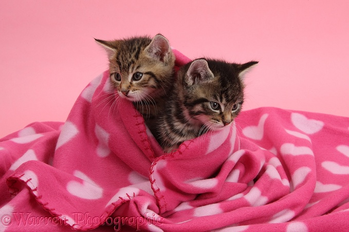 Pictures Of Pink Cats