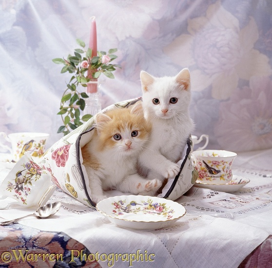 Kittens, one white, one ginger-and-white, on the table in a tea cosy with china tea set