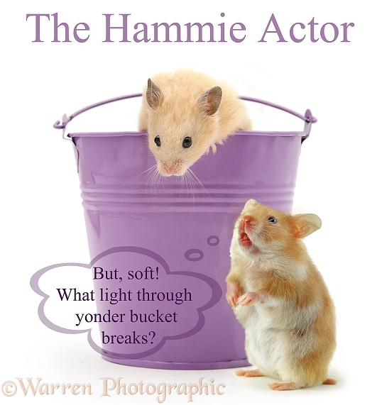 The Hammie Actor does Romeo and Juliet... 'But, soft! What light through yonder bucket breaks?', white background