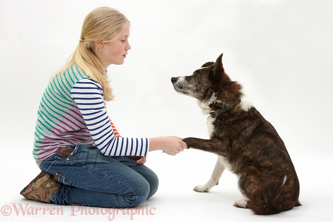 Siena shaking hands with mongrel dog, Brec, white background