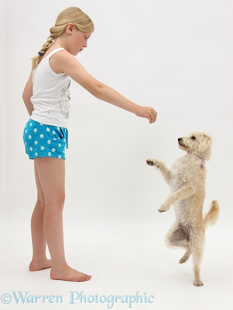Siena teaching Cream Goldendoodle bitch, Lacy, 9 months old, to stand on hind legs, white background