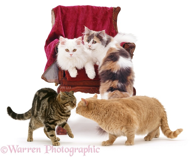 Group of Cats around a child's chair, white background