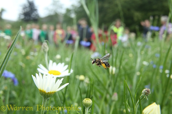 A school visit to Bee World, Bishop's Meadow, Farnham