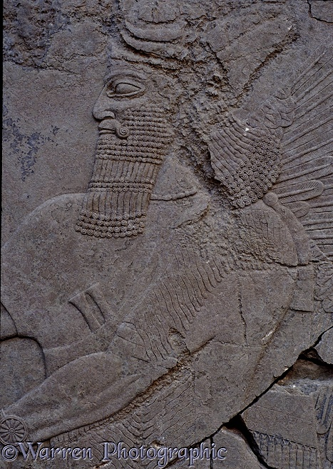 Ancient Assyria: alabaster carving from the palace of King Ashur Nasipal II at Nimrud, Iraq