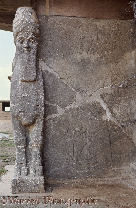 Ancient Assyria: human headed bull guarding the doorway to the palace of King Ashur Nasipal II at Nimrud, Iraq