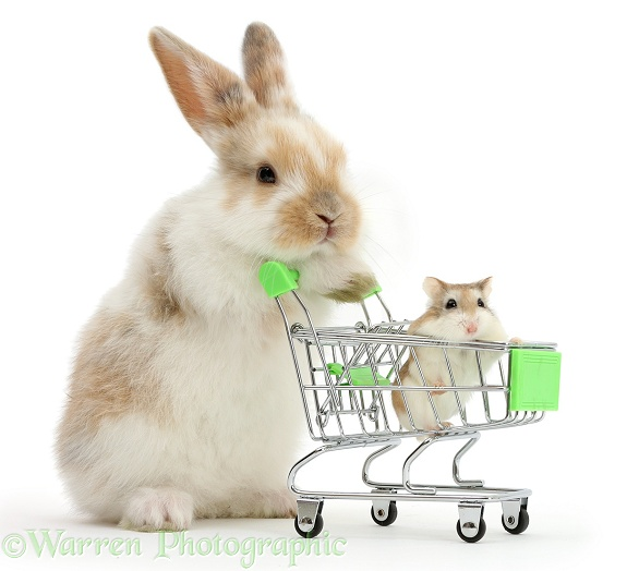 Young bunny with Roborovski Hamster in shopping trolley, white background