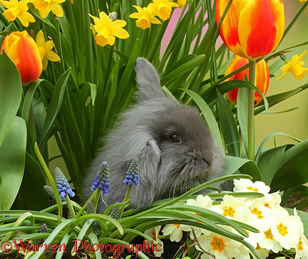 Young rabbit among Spring flowers