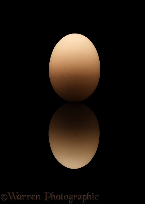 Hen's egg on black background