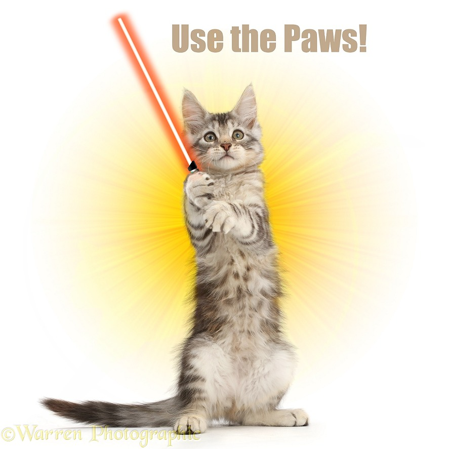 Silver tabby kitten, Loki, 11 weeks old, with light sabre, white background