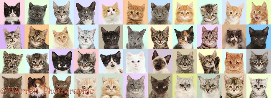Multiple images of cats in different coloured squares