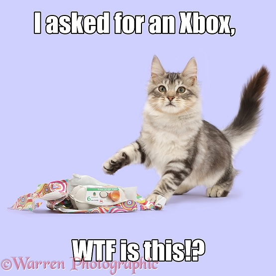 Silver tabby kitten, Loki, 4 months old, unwrapping and egg box, when he wanted and Xbox, white background