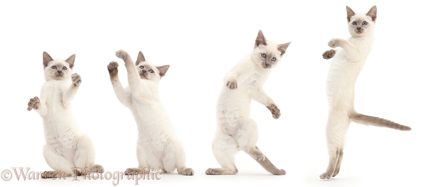 Zumba cat, white background