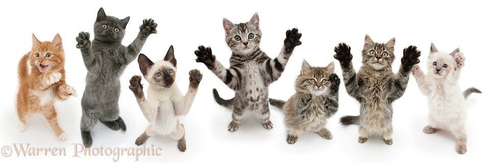 Cats reaching up and grasping, white background