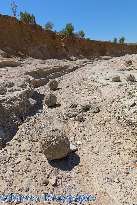 Mud balls in dried up river bed. Altyn Emel National Park.  Kazakhstan