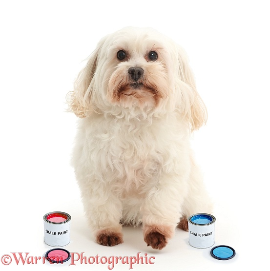 Dog with tins of paint, white background