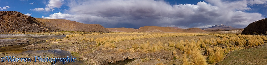 High Altiplano river with tussock grass or Paja Brava (Festuca orthophylla).  Bolivia
