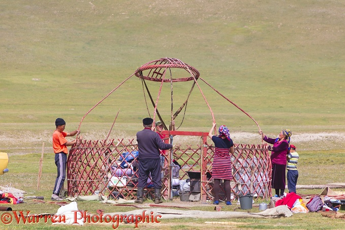 Kyrgiz family erecting a traditional yurt.  Kyrgizstan