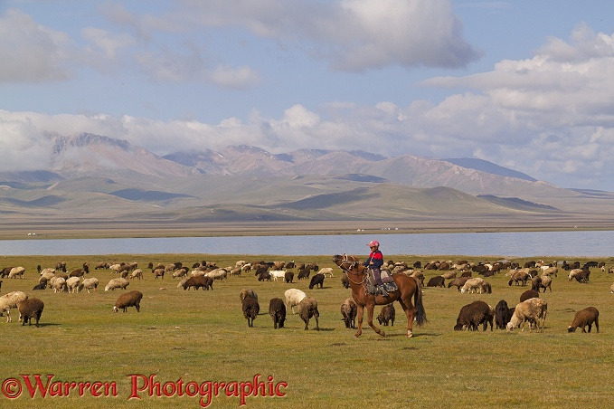 Boy on horseback with sheep by Song Kul Lake, Kyrgyzstan