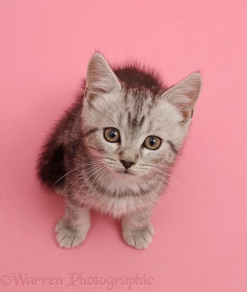 Pink Cats Co Uk
