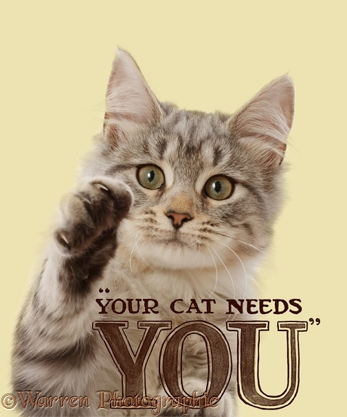 Silver tabby cat Freya, 4 months old, in Your Cat Needs You poster, white background