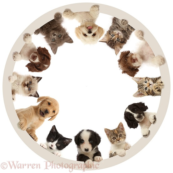 Cats and dogs around the clock - the Furcle of Life 1, white background