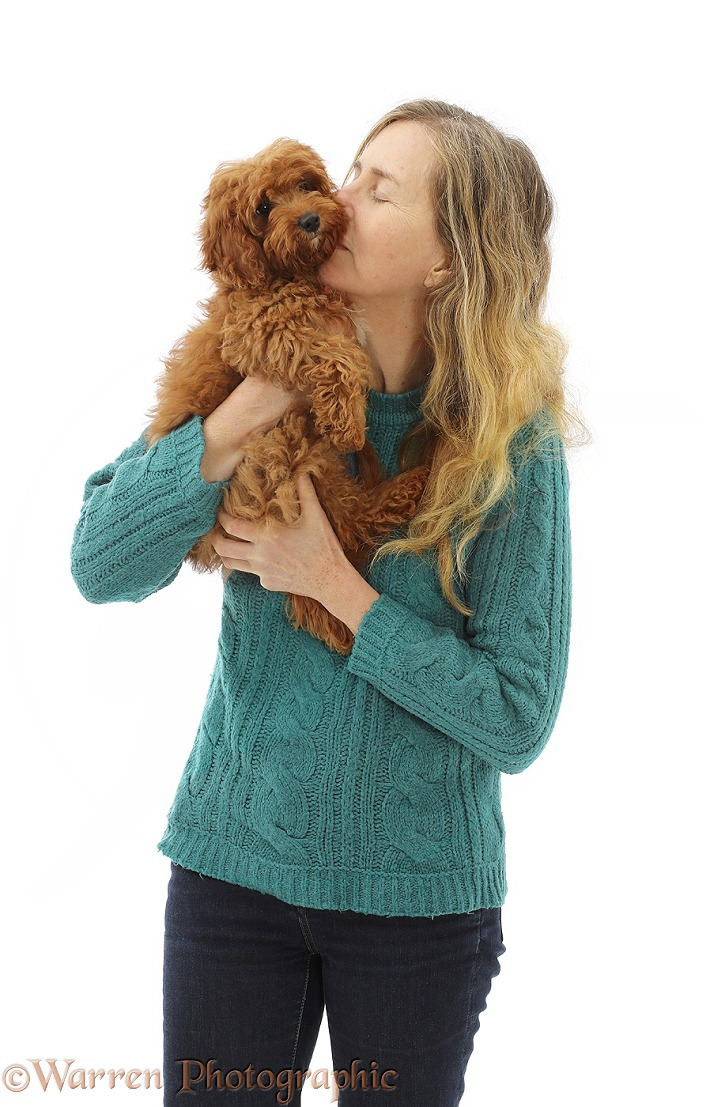Miriam holding red Cavapoo puppy, white background