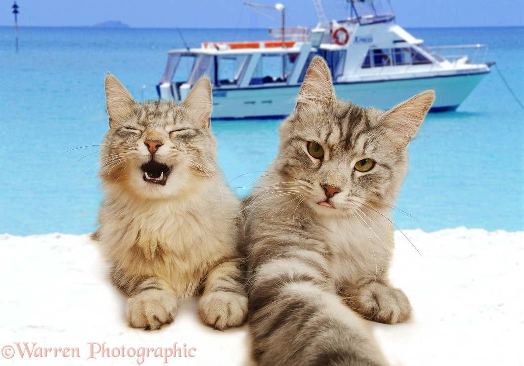 You Only live 9 Times - Cats taking a Selfie on the Beach