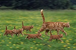 Cat family in motion