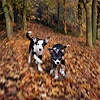 Puppies and maple leaves blurred