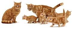 Family of ginger cats