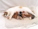 Cat with new kittens