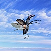 Stag Beetle with sky