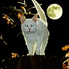 White Cat with reflecting eyes at night