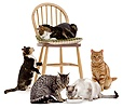 Cats mimsing about on a chair