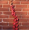 Creeper on a brick wall in New England