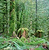 Mossy trees and stumps