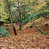 Beech woodland in Autumn 3D R