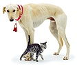 Saluki Lurcher with a kitten