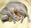 Mother cat lying with kittens