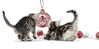 Kittens with Christmas baubles