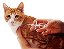 Implanting a microchip in a cat