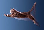 Ginger Cat jumping multiple exposure