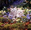 Kittens among woodland flowers